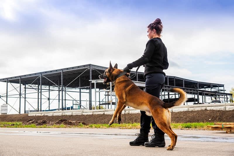 Sicherheitsdienst mit Diensthund