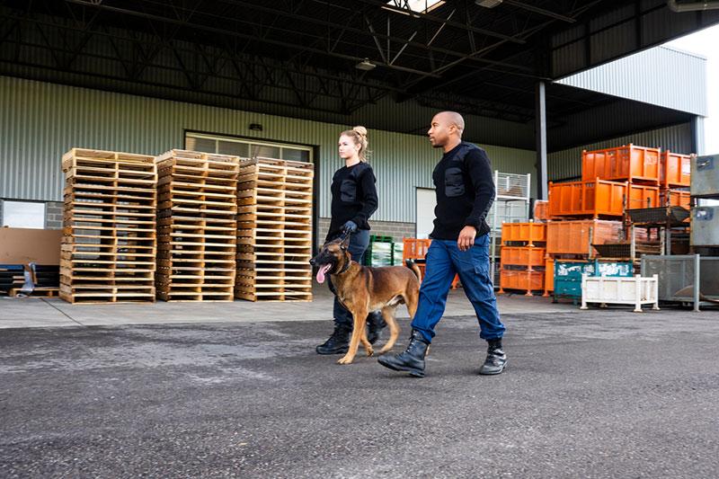 Wachdienst mit Diensthund